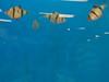 tropical-fish-coral-custom-tank-aquarium-sarasota-fl-8