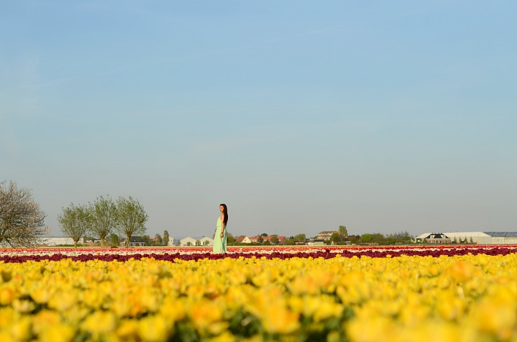 DSC_0067 Tulip fields Lisse