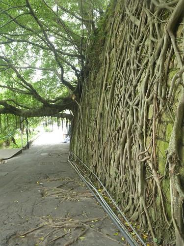 Fujian-Gulang Yu- Centre de l'ile-Ruelles (23)