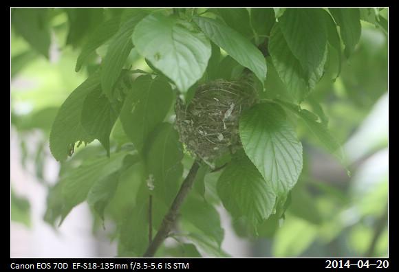 20140420_Nest