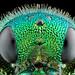 Jewel Wasp by Johan J.Ingles-Le Nobel