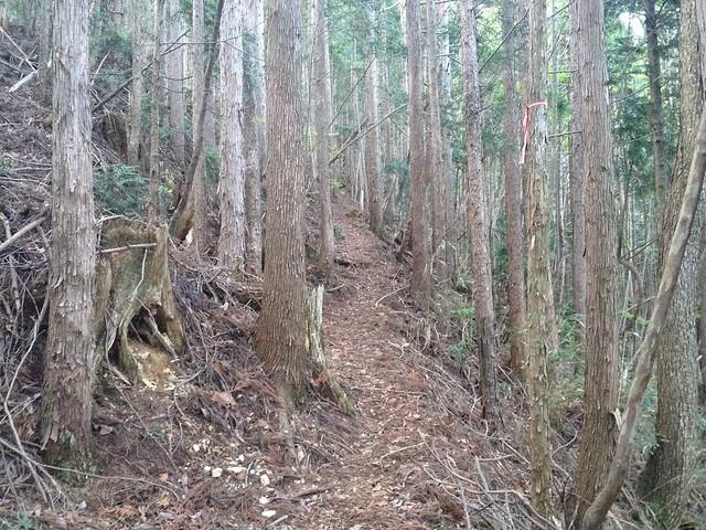 恵那山 登山道
