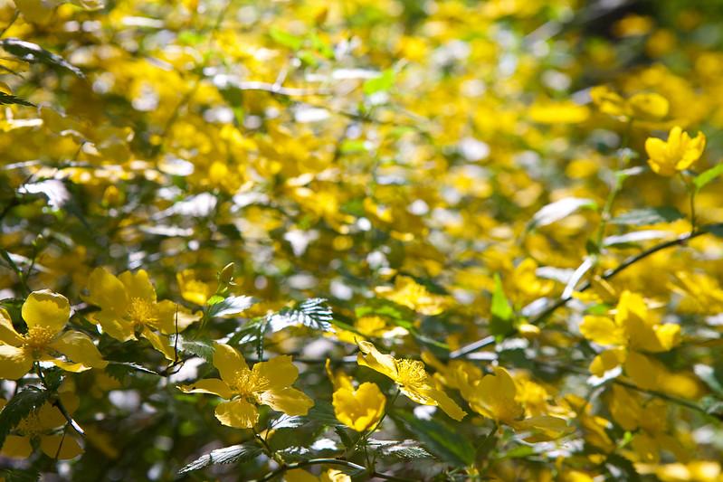 Spring flower. Striyskiy park. Lviv, Ukraine