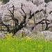 Spring colors / 共演
