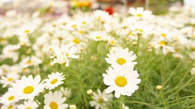 anteketborka.blogspot.com,   fleur 4