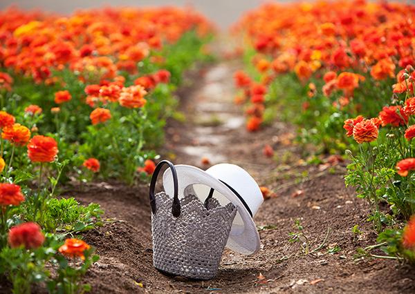 קטיף נוריות קדמה ,בלוג אופנה, סלסלה, כובע, קטיף נוריות, שדה פרחים, hat, ranunculus field, basket bag, blossom