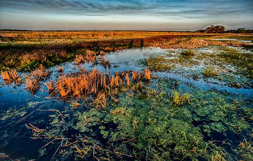 sunset lake landscape florida kissimmee osceola laketogo laketohopekaliga twinoaksconservationarea