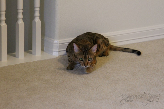 Whiskers & Paws - July 2014 Edition