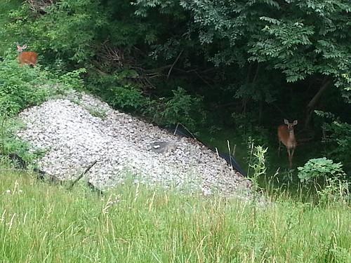 Deer behind the NCASB