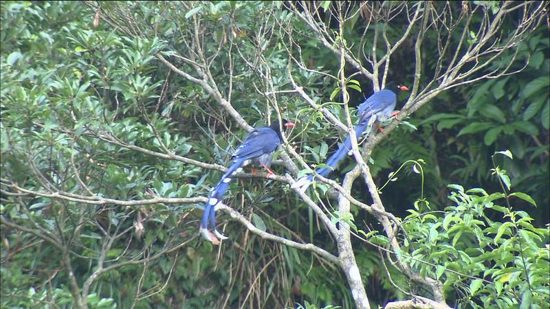 藍鵲茶團隊為坪林建立地域經濟與文化保存