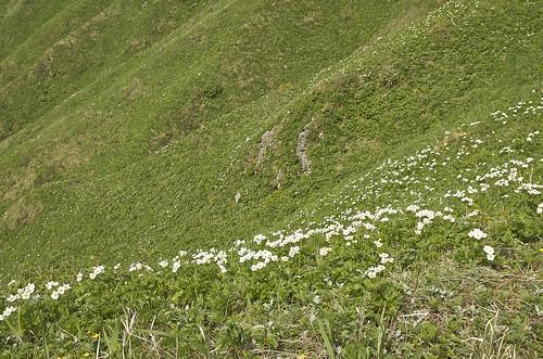 【写真】離島めぐり : フラワーロード