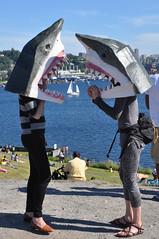Shark conversation