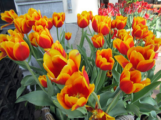 Imagen de Amsterdam Tulip Museum. flower netherlands amsterdam museum spring tulip 2014