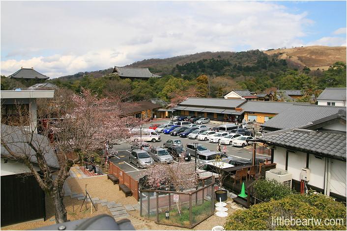 奈良公園-29