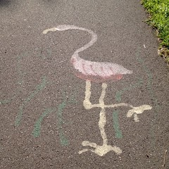 We found a #flamingo on the #farmingtoncanal