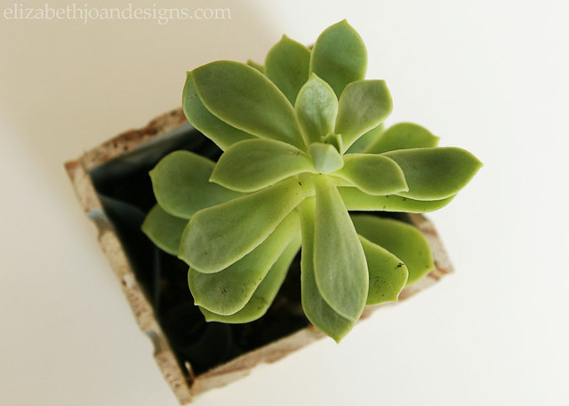 Ruler Succulent Planter 9
