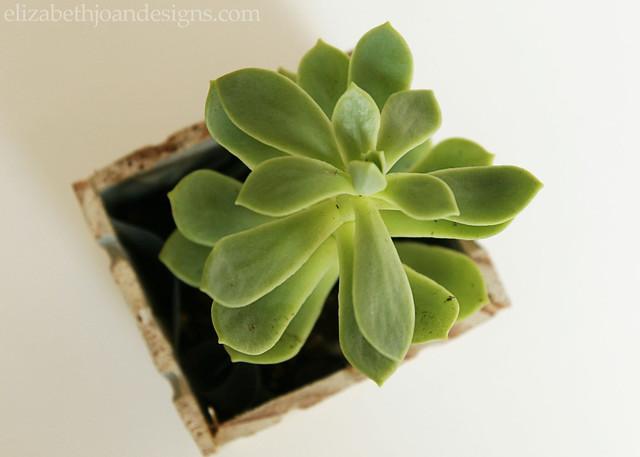Ruler Succulent Planter 9