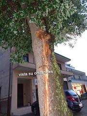 fulmine albero padula 01