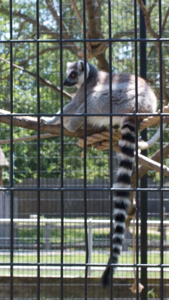 Sioux Falls Zoo 16