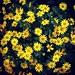 Bloemetjes #bloemen #instaflower #instanature #insta_nature #flowers #flower #bloemetjes