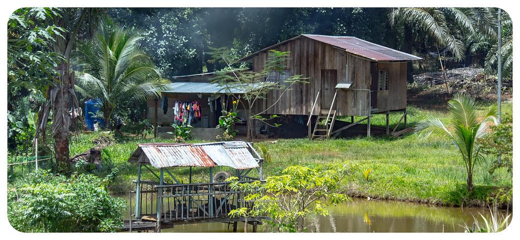 Borneo-20170410-_MG_7232