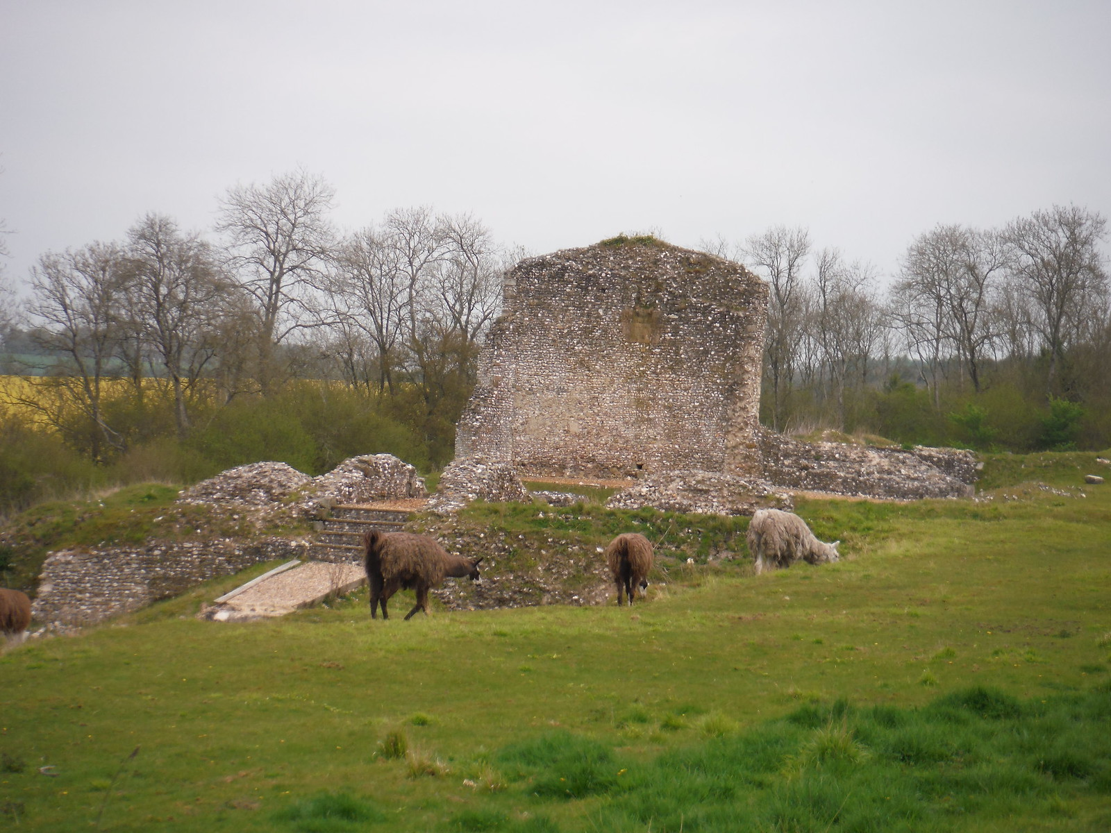 Clarendon Palace remnants SWC Walk 265 - Dean to Mottisfont and Dunbridge (Alternative Start from Salisbury)