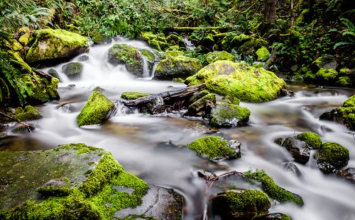 chuckanutdrive oystercreek waterfall bow washington unitedstates us creek water longexposure forest landscape
