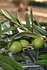 green olives..
