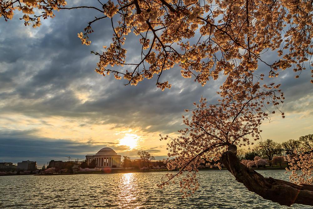 2017 华盛顿樱花-3