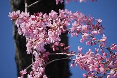 日, 2017-04-02 14:16 - Brooklyn Botanical Garden
