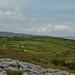 Pleasant Fields - Ireland by bobglennan