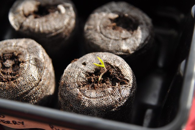 hello little sprout!