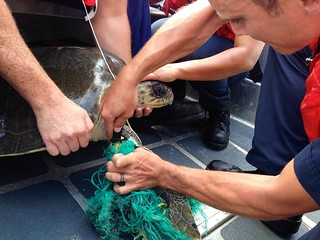 Crew members of the Coast Guard Cutter Stratton rescued a sea turtle that was trapped in fishing line 500 miles off the coast of Panama, March 19, 2014. Stratton returns from a 97-day deployment to the Eastern Pacific Ocean April 13, 2014. (U.S. Coast Guard photo)