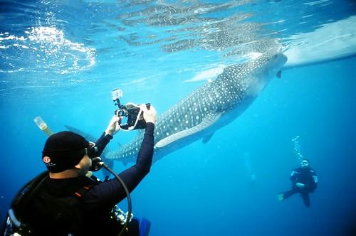 2012.05.11菲律賓歐索陸鯨鯊;攝影:謝新曦