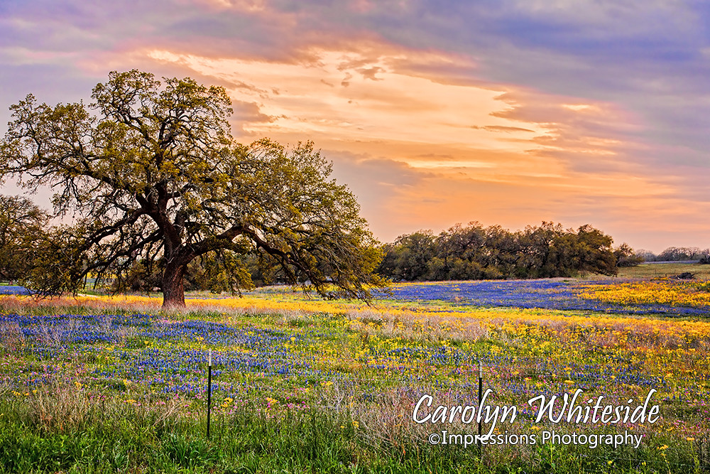 Texas Hill Country Images and Prints | Images from Texas
