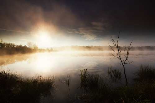 mist fog pond lac filter lee brouillard crepuscule brume étang ain filtre dombes onirique etehreal éthéré certines