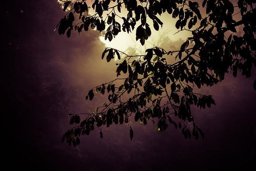 sun mist tree green nature sunrise canon mexico dawn insects jungle breeze