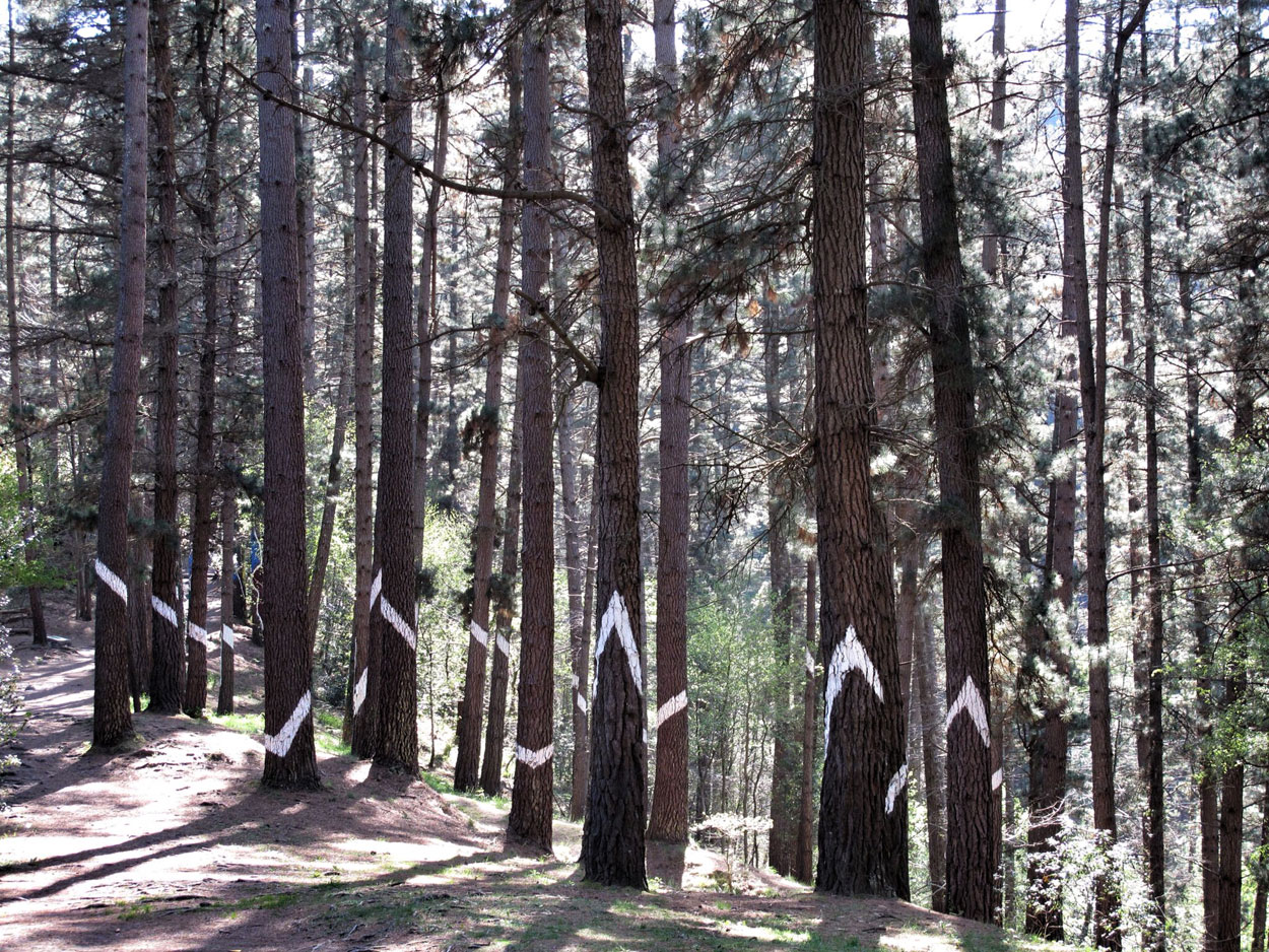 bosque de oma_rayo_tormenta_agustin ibarrola_bosque encantado