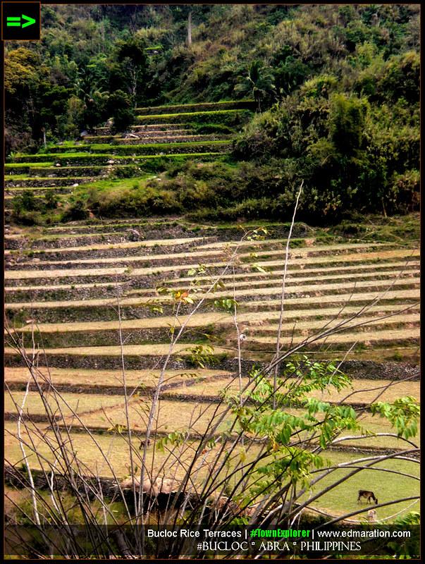 Bucloc Rice Terraces: Bucloc, Abra