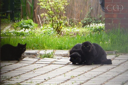 They are the beaus of bear yard cat Muschi! :)