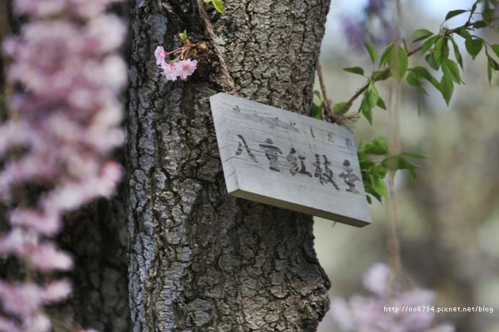 20140502_AomoriSakura_1963 F