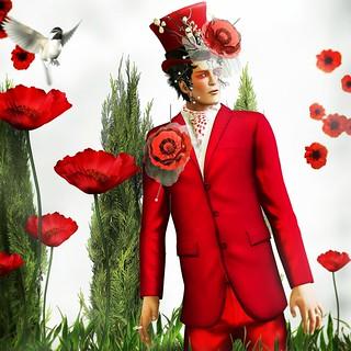 Spring Awakening: The Red Poppy
