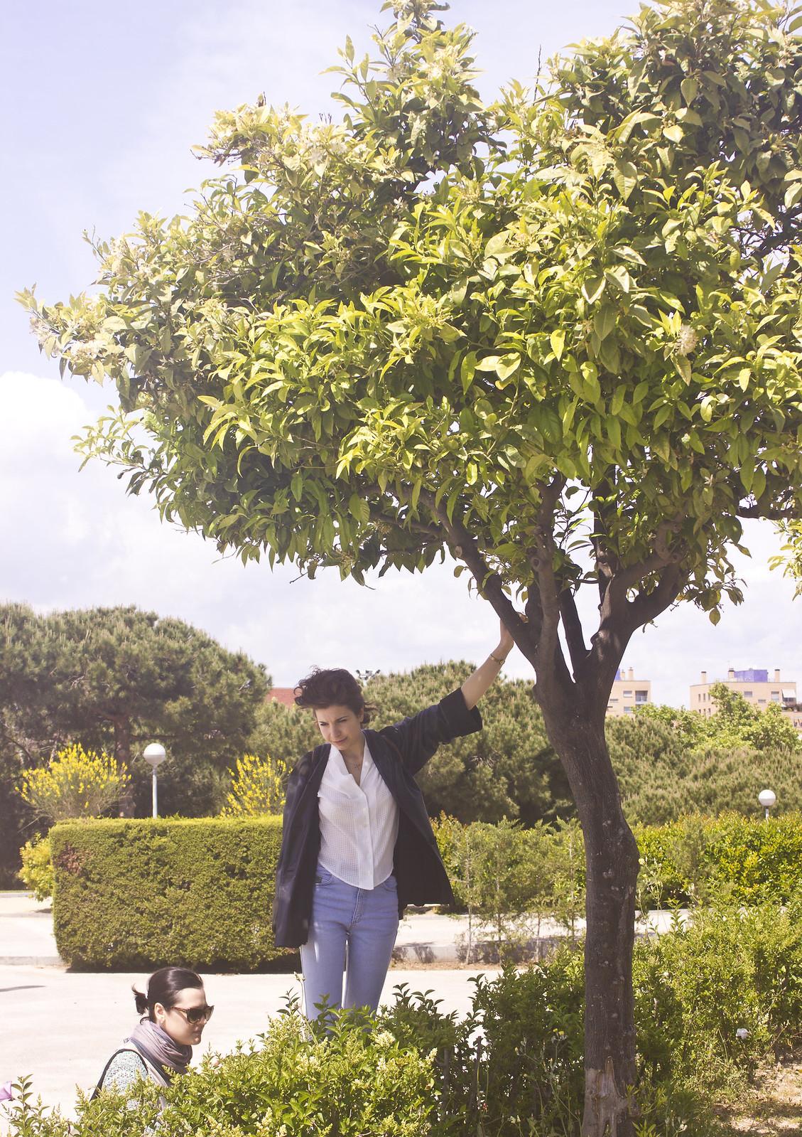 pretty tree in small park barcelona spain