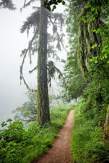 Purisima Creek Redwoods.