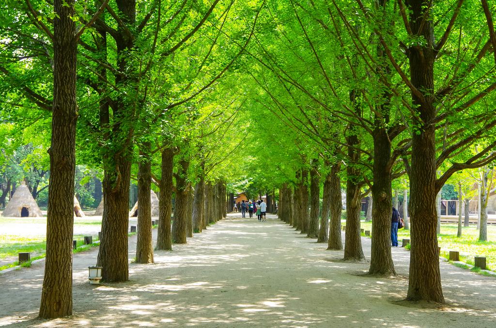 秋天-5月首爾