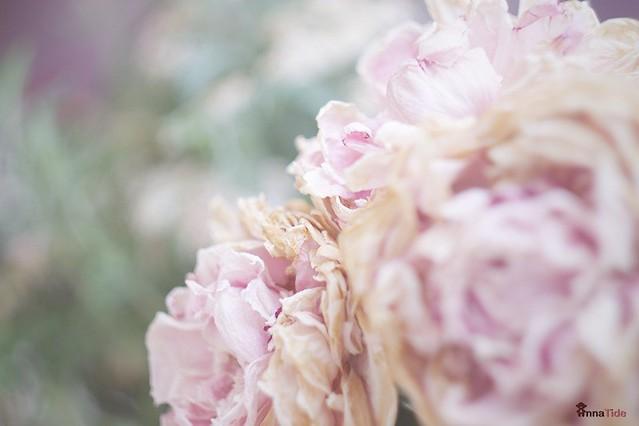 #Peony #flowers
