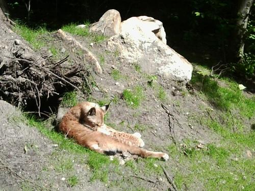 Sonnenbaden und Fellpflege....
