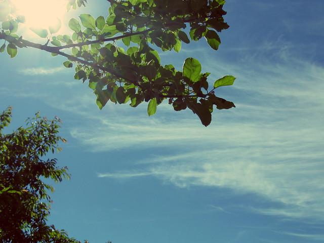 Apfelbaumhimmel
