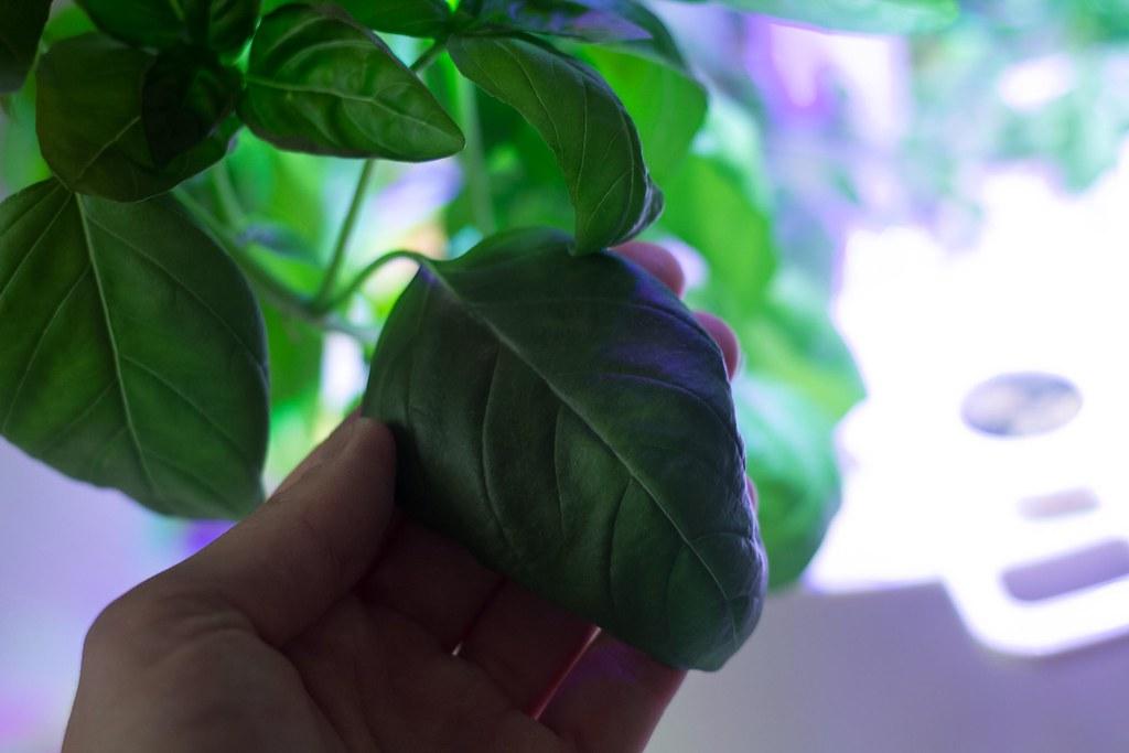 Plantui (8)