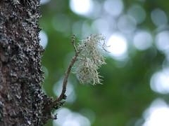Big tree, small twig